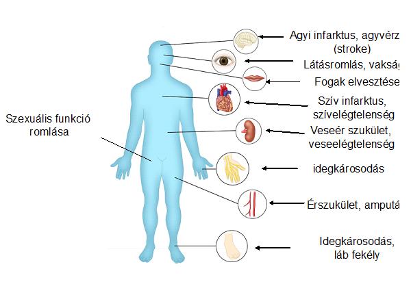 diabetologia1